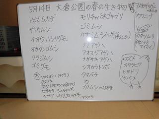 CIMG5323.JPG